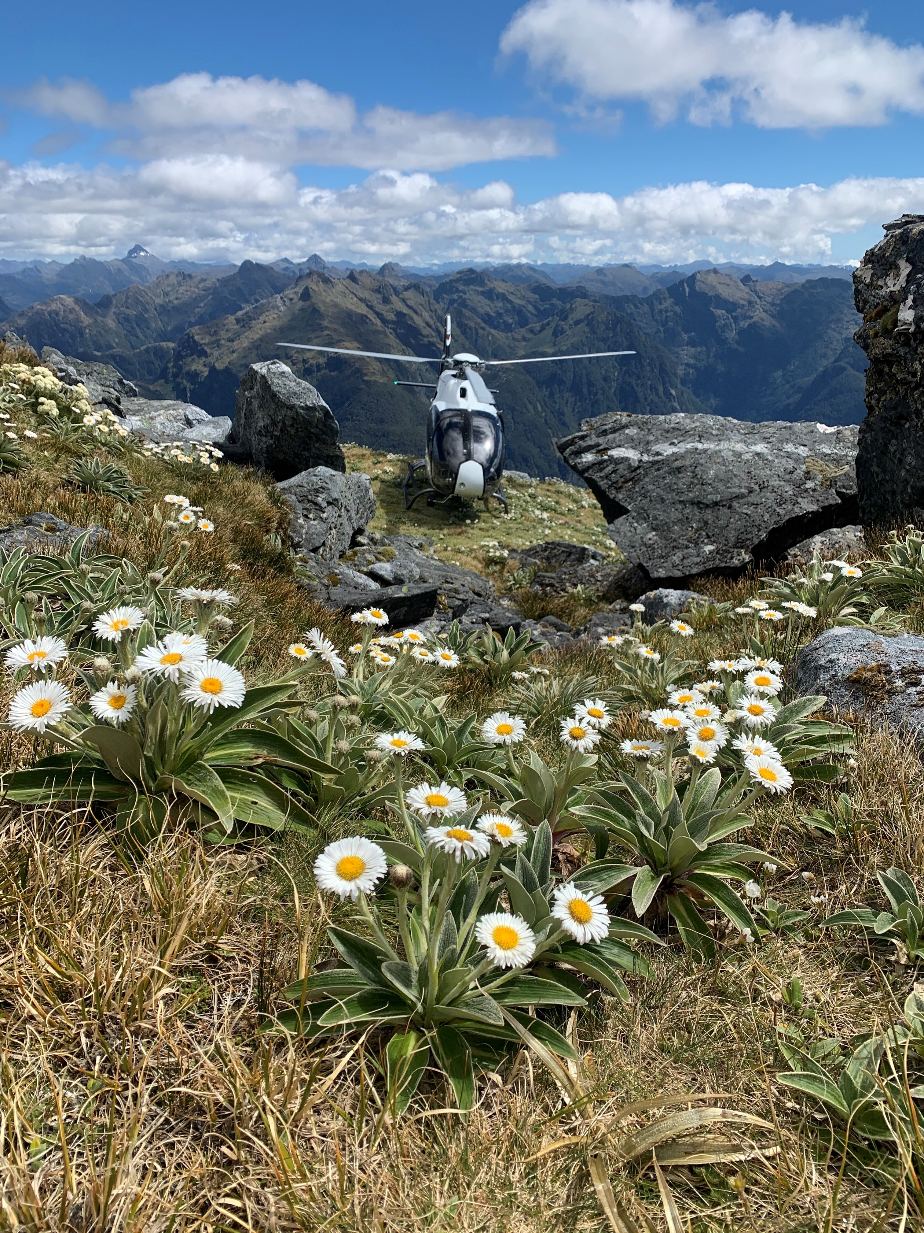 Helicopter with Mountain Daisies